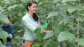 огурцы : Young woman spraying water on plants, then approaching her son with cucumbers