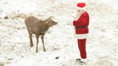 weihnachten : Santa Claus feeding deer and stroking it Stock Footage