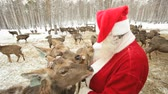 weihnachten : Santa surrounded by deer trying to feed them and stroke Stock Footage