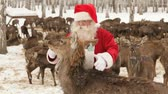 получать : Hungry deer trying to get to food while Santa caressing it