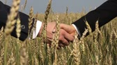 gwóżdź : Business people shaking hands among ripe wheat spikes Wideo