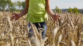 gwóżdź : Preteen girl walking among ripe wheat spikes on a late summer day