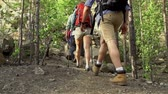 dráha : Pan of four tourists with backpacks hiking through the woods in slow motion