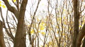 novembro : Tilt down from sky to autumn forest and yellow leaves on the ground Stock Footage