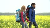 macera : Tracking shot of couple of tourists with backpacks walking through yellow meadow and discussing their further route
