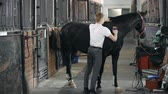 koń : Side view of a horse standing in the stall being combed by its handler Wideo