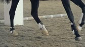 koń : Macro shot of horse limbs during her trot