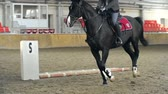 выстрел : Tracking shot of horse running in the arena with man riding it Стоковые видеозаписи