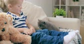 смех : Lovely little girl sitting on sofa next to teddy bear and looking at gray cat clambering over her legs Стоковые видеозаписи