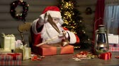 prezent : Santa Claus packing diligently Christmas gifts