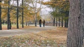 листва : Young couple walking together in the park and holding hands