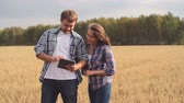 resultados : Farmer looking at his tablet and calling his wife to see the results of cultivating rye Stock Footage