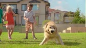 animais : Four kids laughing at cute golden retriever shaking off water on green lawn in slow motion