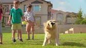 tremer : Cute golden retriever shaking off water on green lawn in slow motion; laughing little kids in the background