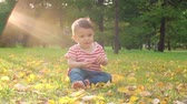 coberto : Adorable little boy sitting on the lawn covered with golden leaves and tearing tree leaf