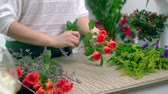 Валентин : Hands of skillful floral designer conditioning red roses for arrangement
