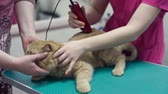 longo : Woman holding and stroking adorable Persian cat while professional groomer cutting hair of pet with trimmer
