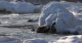 autumn sun : Shooting of Arctic ice close-up. Waves break about ice floes. Harsh sea.