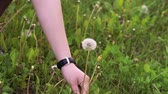 moda : Close up hand cutting dandelion on the green grass. Slowly