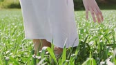 nature close up : Close-up of girl walks in green wheat field and touching the blossom