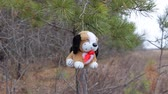 yellow dog year : A small plush dog on the background of New Year pine branches. Year of the dog