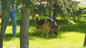grating : Russia, Samara, May 27, 2018: A dog-cripple without a hind leg, walks in the park with the mistress