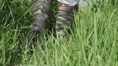 step by step : A man walks along the thick grass in khaki boots of protective color