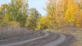 Dirt road in the autumn forest. Autumn landscape