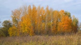 Autumn landscape. Yellow and orange leaves on the trees in a small grove. Front view of the autumn woods