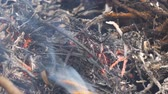 fűtés : Ash and coals from burning dry grass