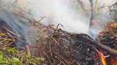 labareda : Burning dry grass close-up Stock Footage