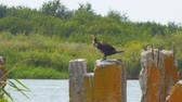 スプレッド : Cormorant sitting on a concrete block against the bushes and spreads its wings