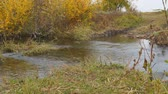 kütük : Little river in the autumn. Water flows in a small river. Stok Video