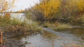 kütük : Little river in the autumn. Water flows in a small river. Camera panning Stok Video