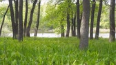 lys de la vallee : View of a lake or river through a forest through oak trees. Camera panning