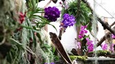 aura : Total of a orchids garden Stock Footage
