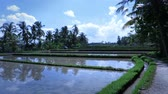 krajina : Beautiful scenic video of rice plantation in Ubud, Bali
