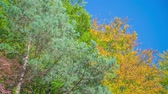 бросать : Beautiful green and yellow leaves on trees. The sun is shining and its a nice and warm day. The nature is gorgeous. Стоковые видеозаписи
