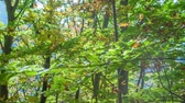 košíček : Its summer time and the leaves on trees are beautifully green. The sun is breaking through branches. Dostupné videozáznamy