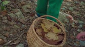 košíček : A basket is full of leaves of different colours. A family is spending time outdoors and the parents are taking children out for a walk into the forest. Dostupné videozáznamy