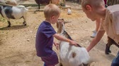 young elephants : Children are touching the animals in the zoo. One boy is also leaning to the goat. It looks very cute.