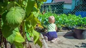 inocente : Nice baby girl piddling around the organic garden and touching the strawberries leaves. Stock Footage
