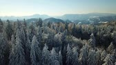 вилла : A forest with mostly spruce trees. Its winter time and the countryside is covered with snow.