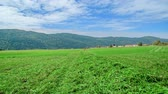 грабли : We can see a freshly cut green grass on a big meadow. The day is outstandingly beautiful.