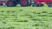 грабли : A freshly cut grass. It looks beautifully green. The farmers are working outside.