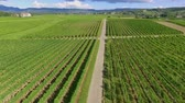 demônio : A narrow country road in the middle of vineyards. Aerial shot. Its summer time and the countryside looks magnificent and green.