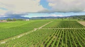 bağcılık : Big vineyards in the middle of the countryside. The day is sunny and beautiful. Aerial shot.