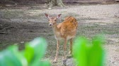 A cute deer and just standing there in the middle of a forest and it is amazed by all the people that are watching it in the zoo.