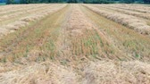 kopec : We can see wheat on the field after harvesting. Aerial shot. Its summer time. Dostupné videozáznamy