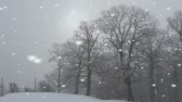 winter : Falling snowflakes in a rural landscape with a woodland of bare branched deciduous trees on a cold winter day